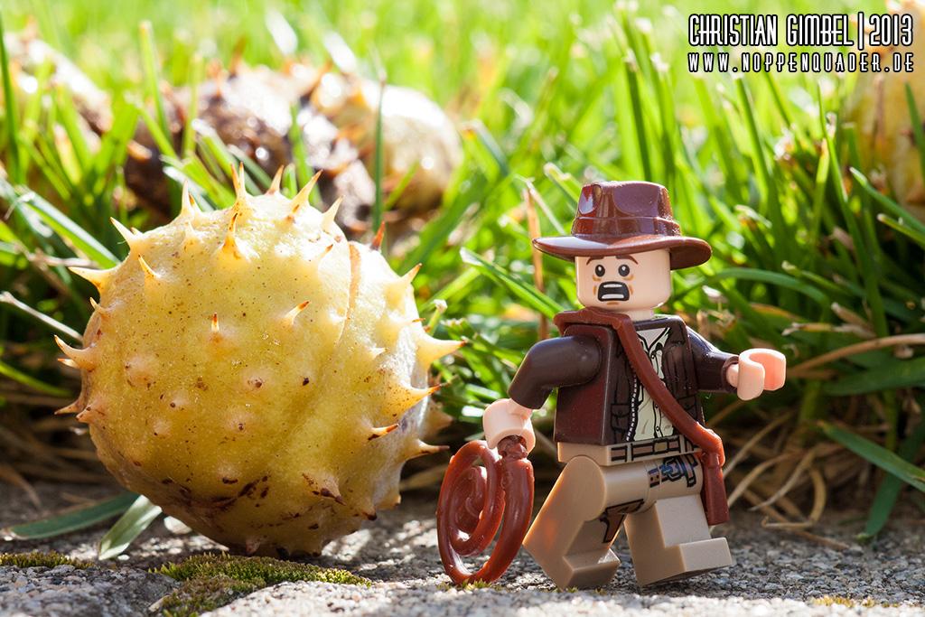 Indiana Jones flieht vor einer Kastanie - Artikelbild