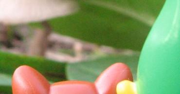 Pilze sammeln für Profis