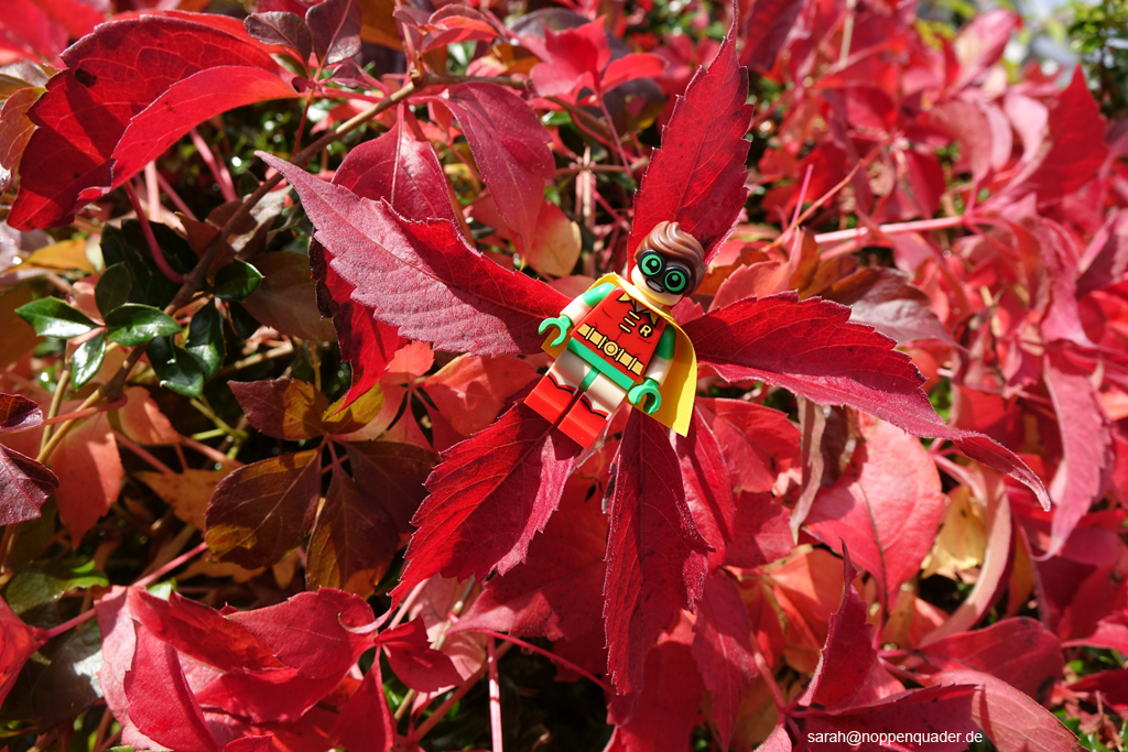 lego minifig noppenquader moc Robin Batman Rotkehlchen Laub Herbstlaub Autumn outdoor laub red leaves star