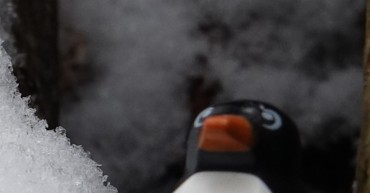 Flieg Pinguin